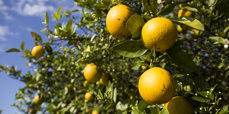 UF/IFAS Citrus Research and Education Center Field Day entradas