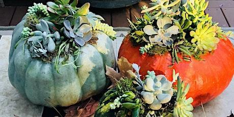 Succulents & Pumpkins!  9.28.21 tickets