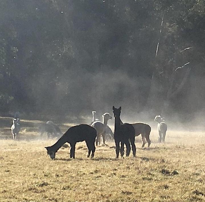 AAA Tasmania - Alpaca Birthing Workshop image