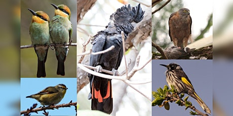 What Bird Is That? Guided Walk with BirdLife WA tickets