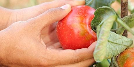 Selling your whole harvest: new markets for seconds, gluts & unpopular cuts biglietti