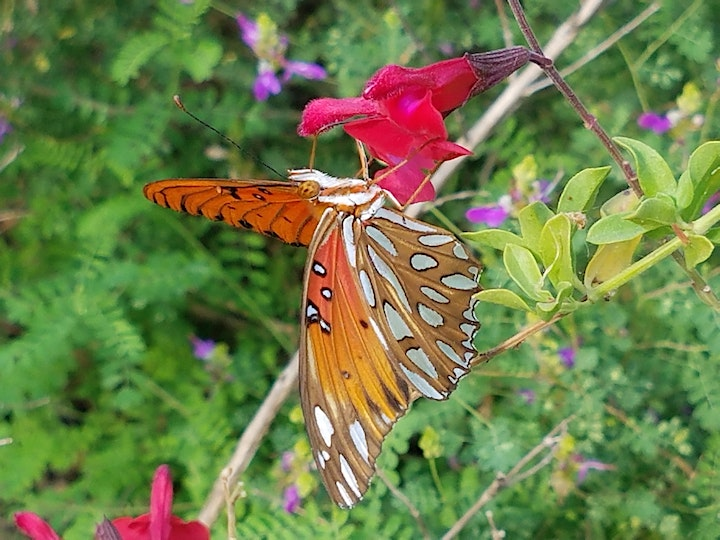 Fall Plants for Fall Butterflies image