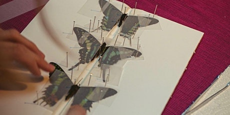 Make Your Own Butterfly Frame Workshop in Battersea tickets