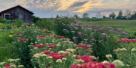 Cut your own Flowers - Saturday sunset, Sept 18 tickets
