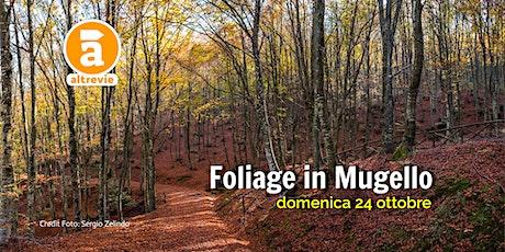 Foliage in Mugello biglietti