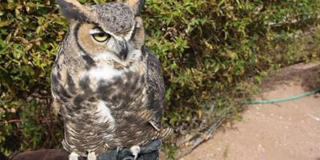 Live Owl Program tickets