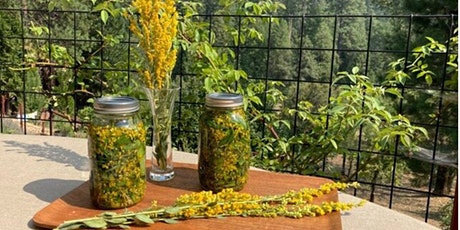 Winter Herbal Remedies Workshop with Evelyn Rosefield & Betsy Harden tickets