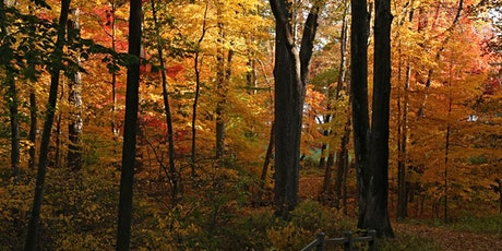 October 30 | 9:30 – 11 am | Fall Foliage: Identifying Native Trees tickets