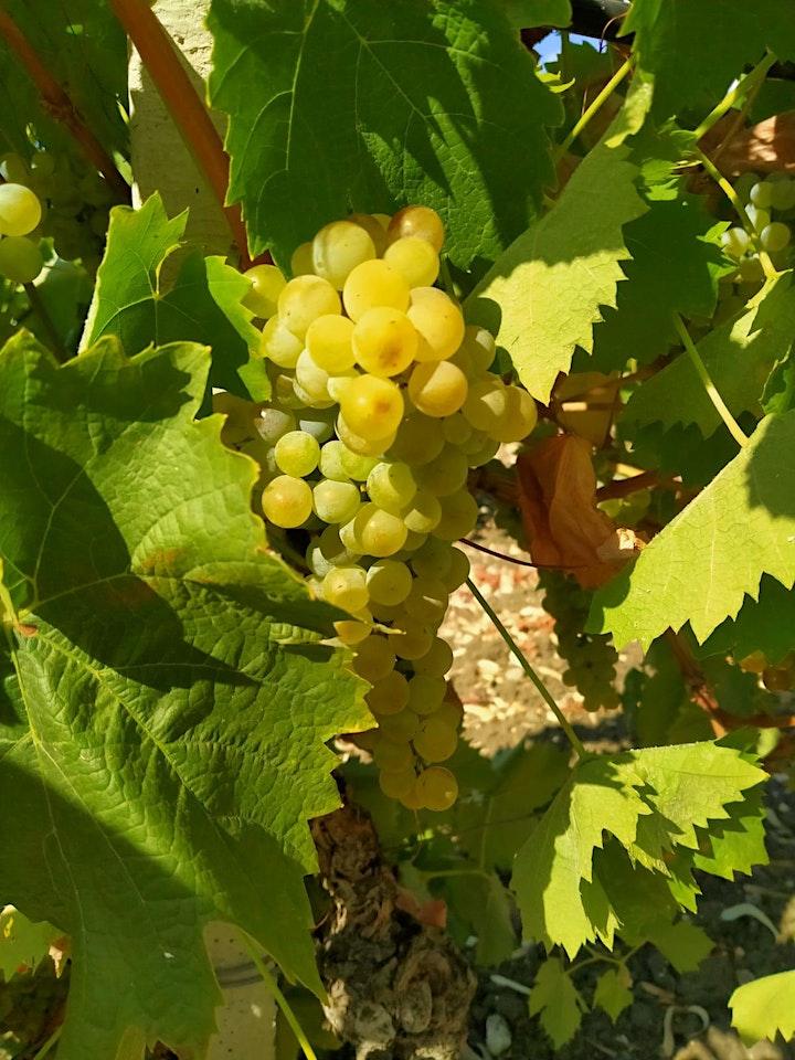 Antica pigiatura dell'uva image