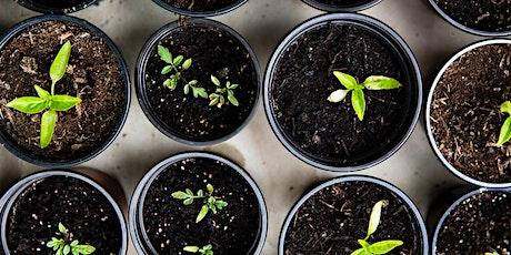 Kids Plant Propagation Tutorial tickets