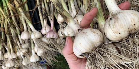 How to Grow Great Garlic! - Master Gardening with a Master Gardener Series tickets