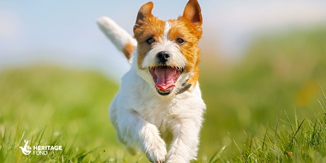 Scruffs at Cally Park! A fun day for you and your dog tickets