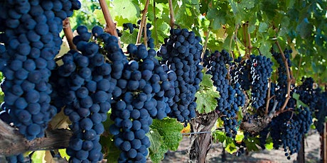 Risky Business - Making great wine in Napa & Sonoma tickets