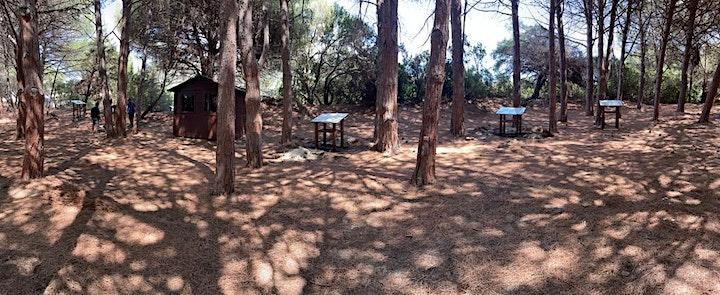 Immagine Visita guidata del percorso didattico esperienziale  pineta di Campulongu