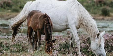 Basics about Horses Workshop tickets
