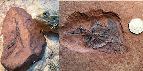 New fossil discoveries - what they tell us about Sidmouth in ancient times tickets