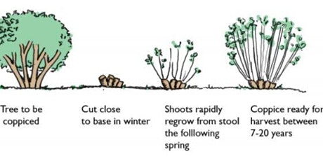 Coppicing at Eastham Country Park tickets