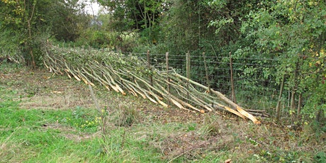 Beginners Hedgelaying tickets