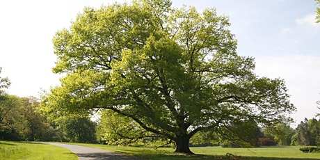 Easy Peasy Tree ID tickets