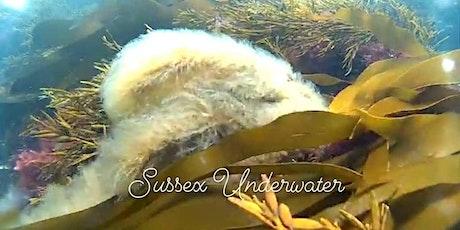 Sea Kelp Forest Talk - Sussex Underwater tickets