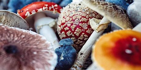 Fall Fungi Bioblitz tickets