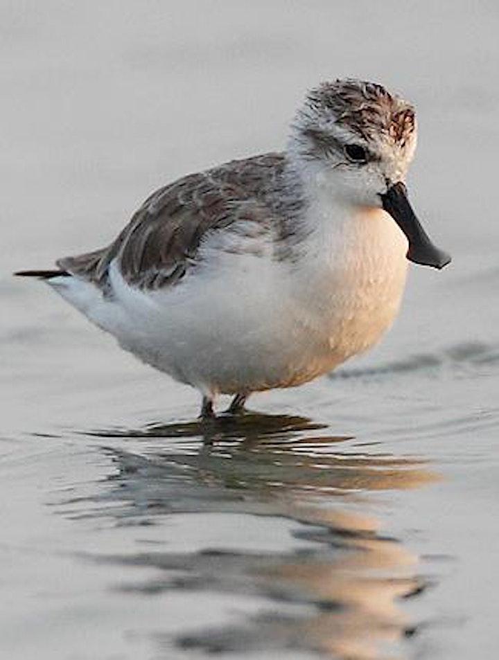 Bird-watching trip in Long Valley image