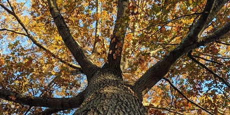 Building with Trees: Green Built Alliance Fall 2021 Workshop Series tickets