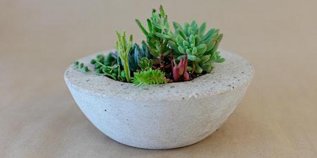 Concrete Pot Workshops + Succulent Care tickets