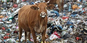 Inside Toronto's Organic Waste
