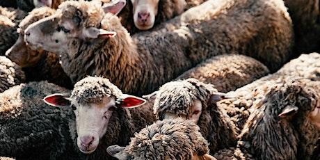 CCCB-El Futur dels Drets Animals-Alternatives a l'experimentació animal entradas
