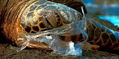 Beach Clean Up to Save Sea Turtles tickets