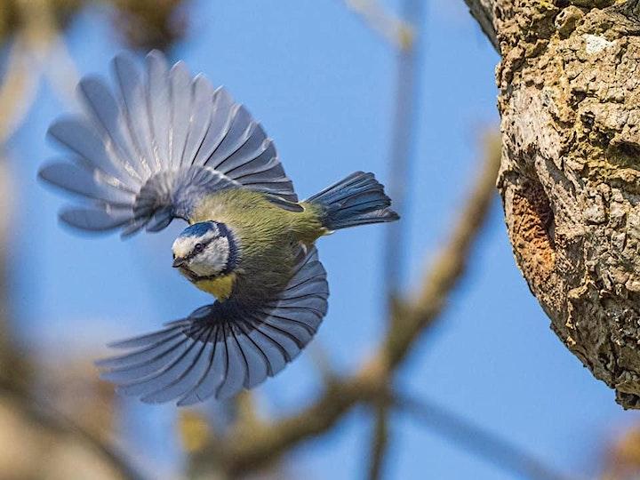 Flight/ Andrew Fusek Peters image