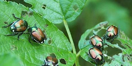 Popillia japonica: diffusione in Lombardia, prospettive di lotta biglietti