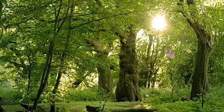 Forest Bathing - Tree Medicine  Plant  Walk tickets
