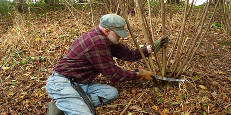 Thornton Wood coppicing tickets