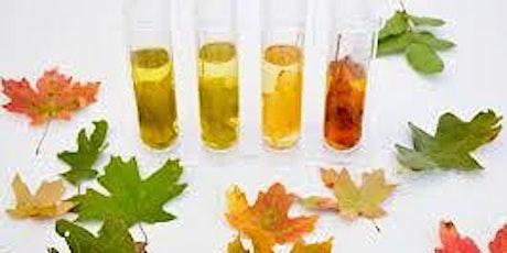 Taller de las hojas: adecuado para edades 3 a 10 años entradas
