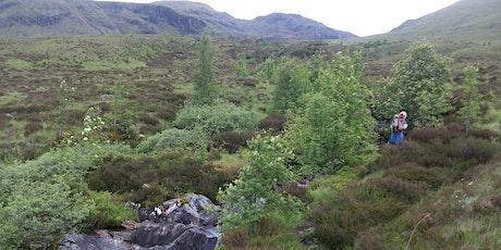 Ramblers Scotland's view on rewilding tickets