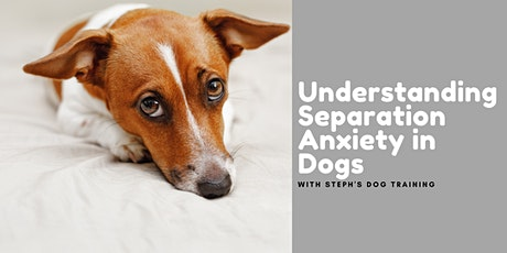 Understanding Separation Anxiety in Dogs tickets