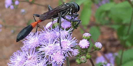 Fall Garden Planting for Pollinators tickets
