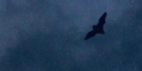 Bat Walk at Hill Holt Wood tickets