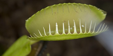 Plantology on Tap: Monstrous Plants of the Silver Screen tickets