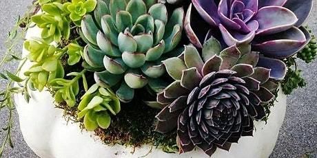 Large Succulent Pumpkin Centerpiece Workshop with ReRooted tickets