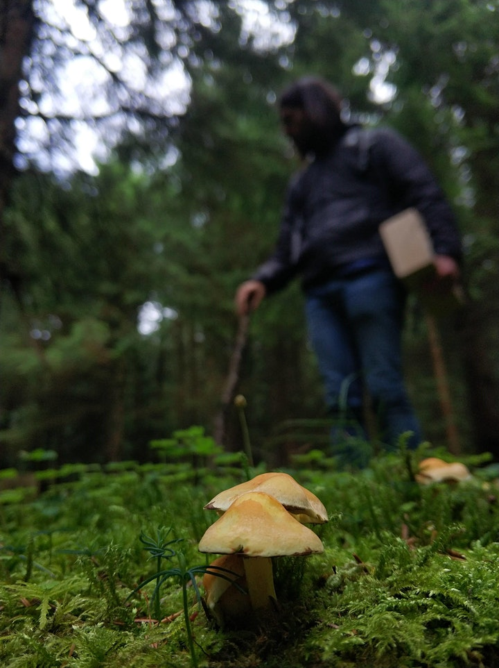 Introduction to Wild Food Foraging image