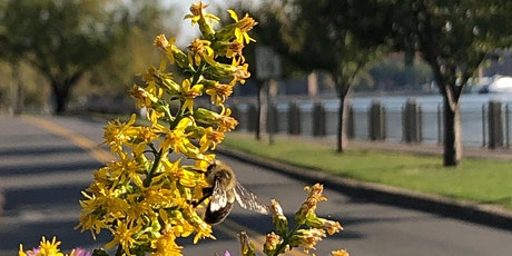 New York City Pollinator Working Group  Social on Roosevelt Island tickets