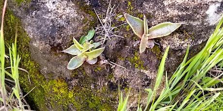 Native Plant Gardening: Santa Monica Mountain Native Plants for the Garden tickets