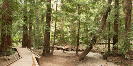 Volunteer at Redwood Grove Nature Preserve, Los Altos: Habitat Restoration tickets