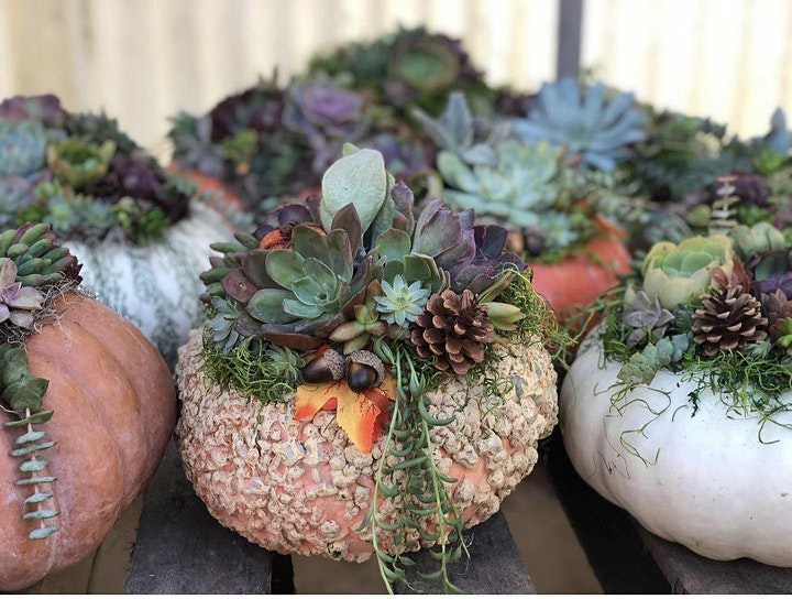 Succulent Pumpkin Workshop - Sip 'n' Succs image
