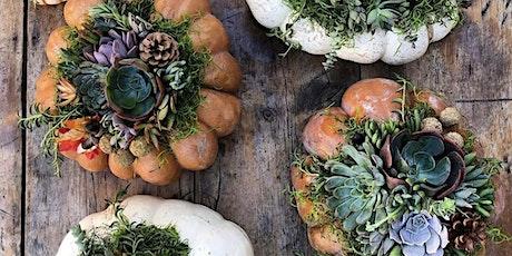 Succulent Pumpkin Workshop - Sip 'n' Succs tickets