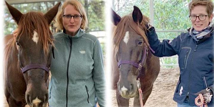 Pferdegestütztes Coaching - Interaktive Workshops mit Pferden: Bild
