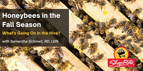 Honeybees in the Fall Season: What's Going on in the Hive? tickets